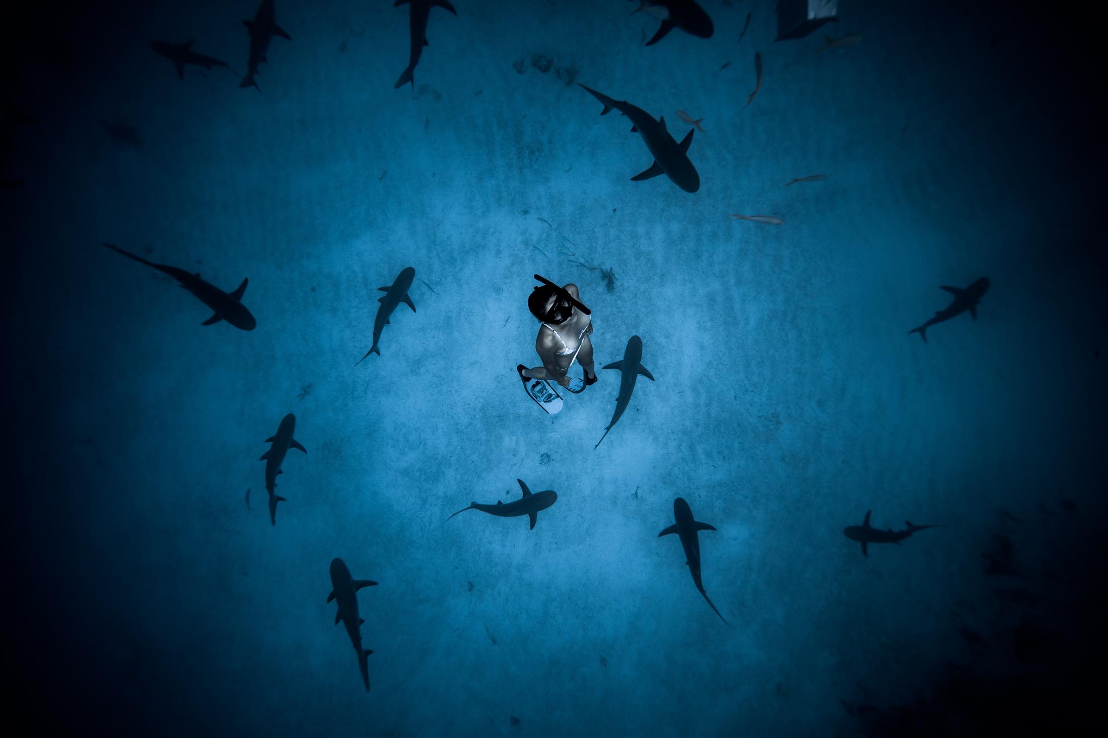 Film Seekers boards Australian doc 'Envoy: Shark Cull'