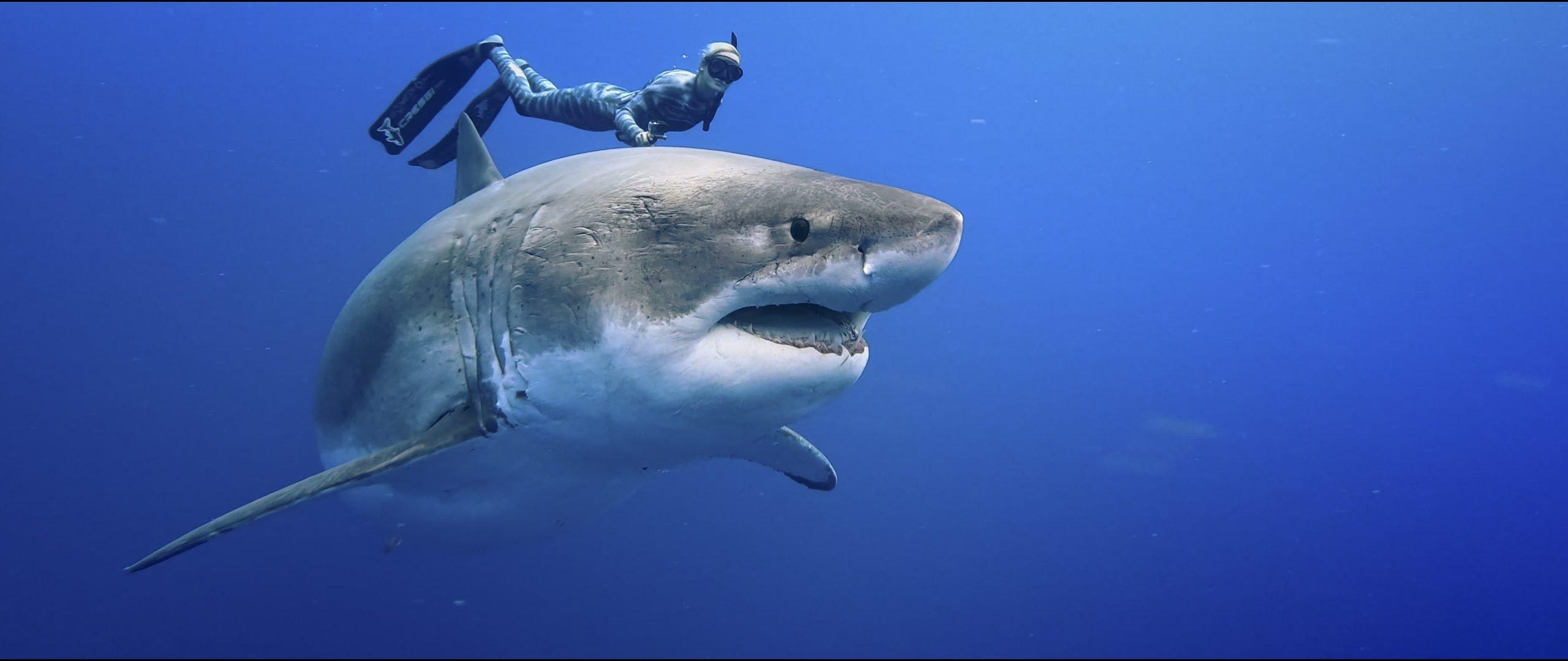 Doc 'Envoy: Shark Cull' Sells Widely
